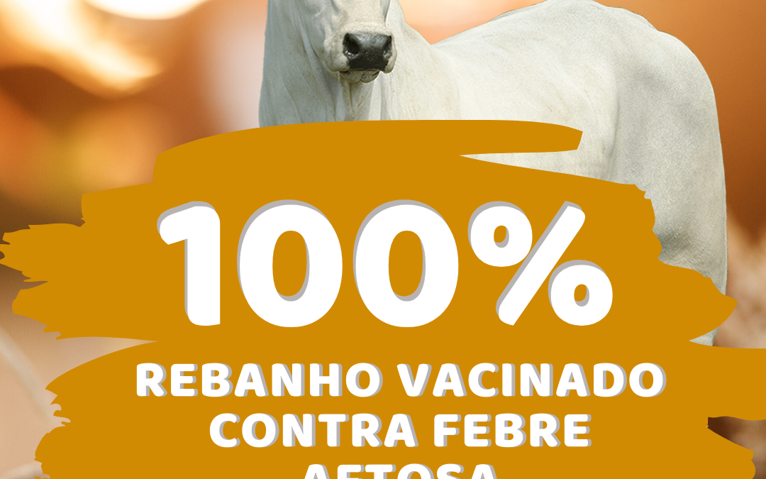 Muritiba atinge 100% do gado vacinado contra febre aftosa