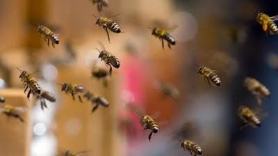 Cabaceiras do Paraguaçu: Homem morre após sofrer ataque de abelhas